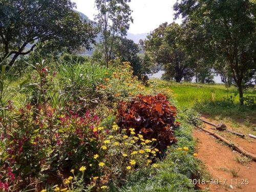 Bhandardara Garden Area