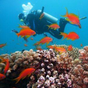 Tarkarli Beach Scuba Diving1-min