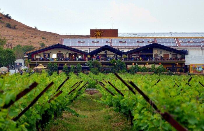 Sula Vineyards Pic